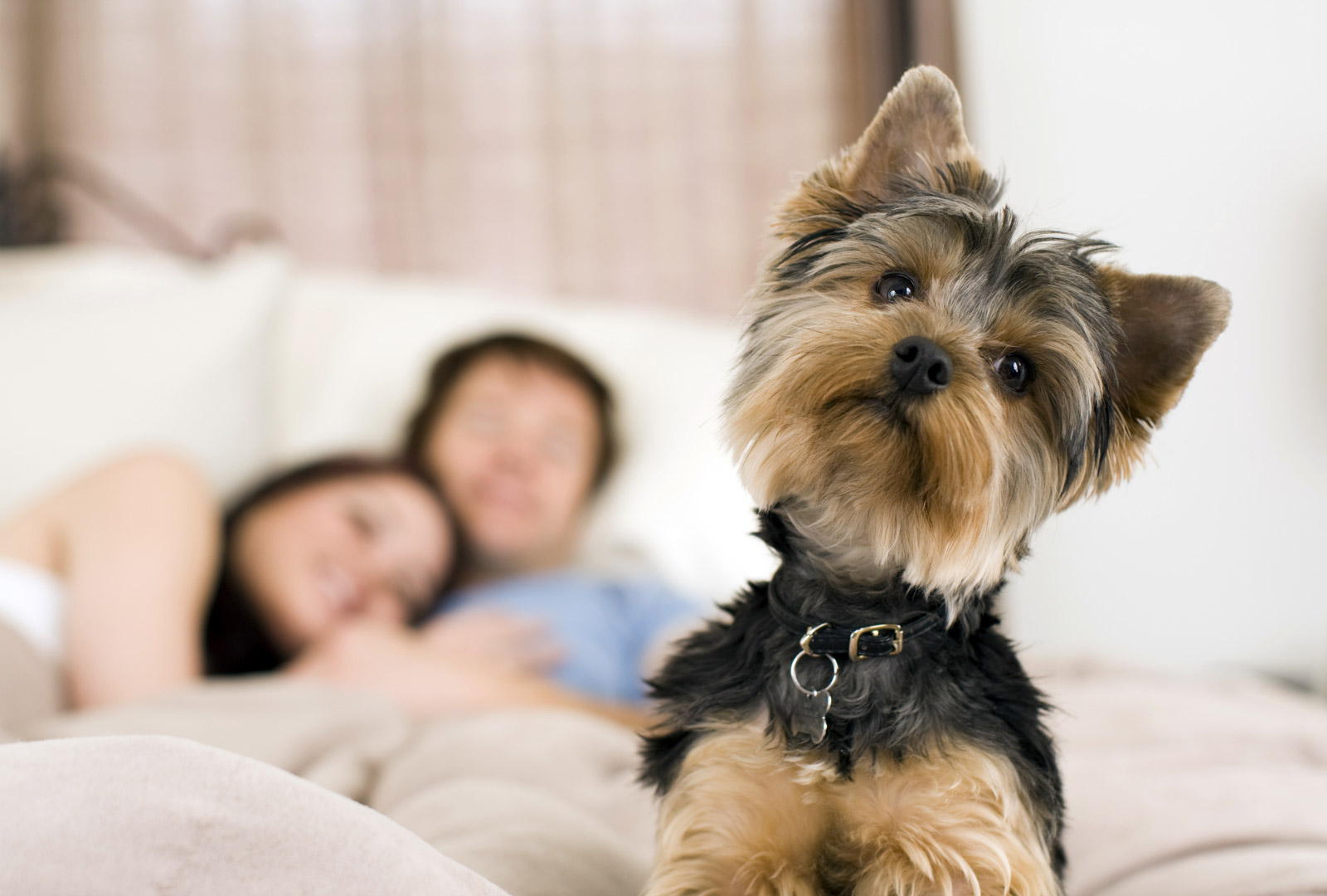 Some of the Weirdest Pet Insurance Claims in History