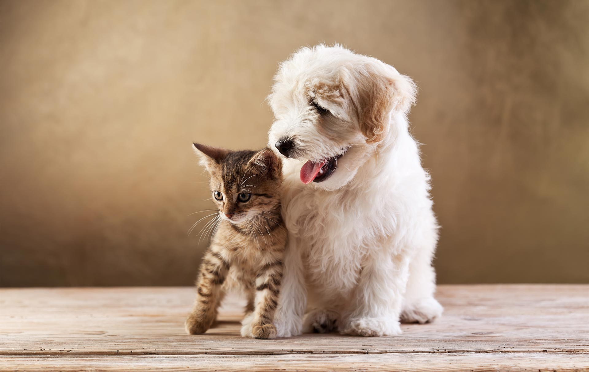 Why Taking Out Veterinary Pet Insurance Is Crucial