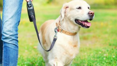 Got A Pet? Read Why Pet Insurance Is So Important For Your Pet And Your Finances